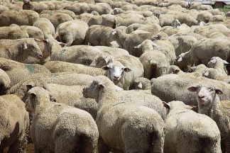 A Sheep in Wolf's Clothing: the Enforcement Provisions of the White House Immigration Bill